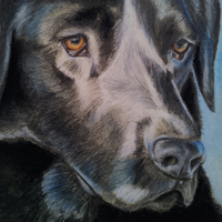 Portrait drawing of Labrador Pike